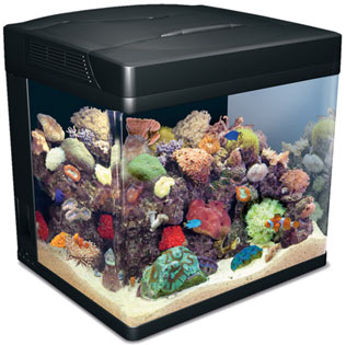 red sea max nano reef tank marine coral