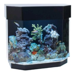 uniquarium desktop aquarium for freshwater or saltwater