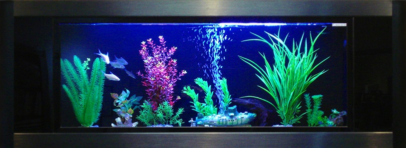 Aquavista, panoramic, wall, mount, mounted, aquarium, aquariums, fish, tank, tanks