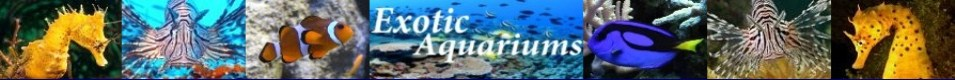 Exotic-Aquariums.com, logo, saltwater, marine, coral, reef, fish, care, breeding, spawning, guide