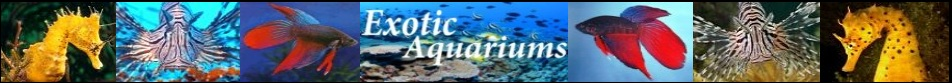 Exotic-aquariums.com., website logo, exotic, aquarium, aquariums, fish, tank, tanks, freshwater, saltwater, fresh, salt, water, marine, reef, coral, care, breeding, spawning
