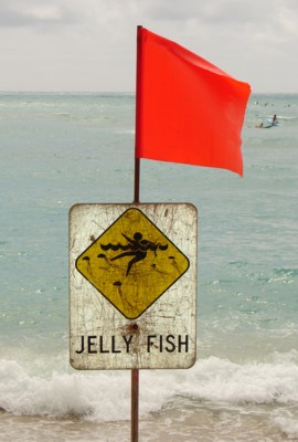 box jellyfish stings warning sign