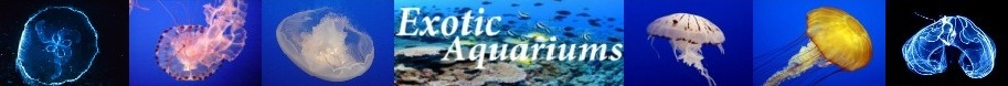 exotic-aquariums.com, jellyfish, section, logo, moon, about, facts, pet, pets