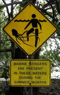 box jellyfish stinger warning sign, W