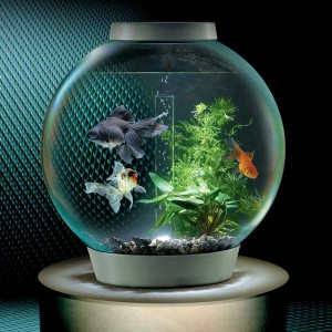 biorb fish bowl for jellyfish tank conversion